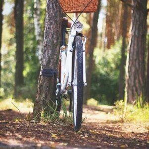 Fietsroutes Landgoed Fredeshiem De Bult Steenwijk3